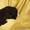 Продаются щенки породы Дратхаар #861217