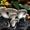 Семена  вешенки (мицелий) #1024922