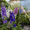 Многолетние  и однолетние садовые растения #1203540
