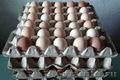 Яйцо инкубационное куриное (Адлер Серебристый)