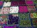 Многолетние  и однолетние садовые растения - Изображение #6, Объявление #1203540