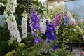 Многолетние  и однолетние садовые растения